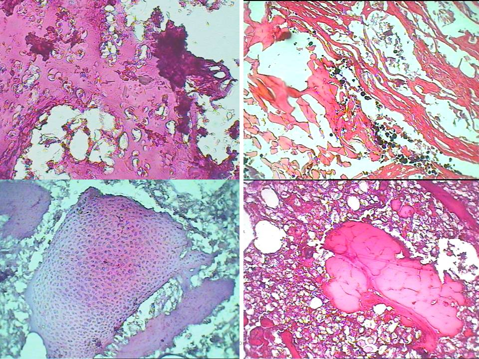histology-of-meat-products2